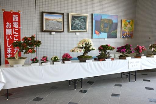 『皐月(サツキ)の展示02』の画像
