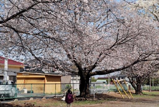 『桜02』の画像