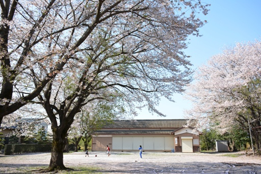 『桜03』の画像