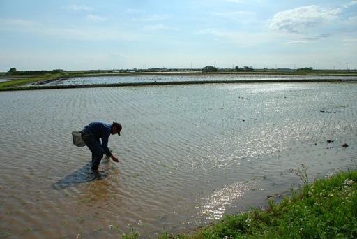『境町の田園風景02』の画像
