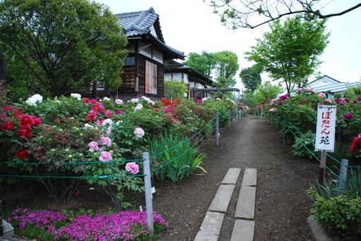 『香取神社のぼたん苑02』の画像