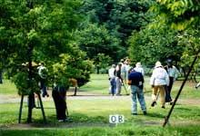 グラウンド・ゴルフをプレーしている画像です