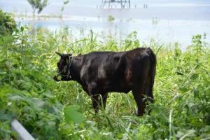 『常陸牛』の画像