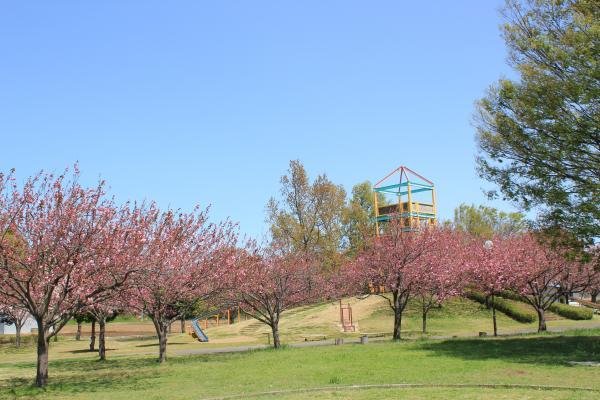 『さくらの森パーク(4月15日)』の画像