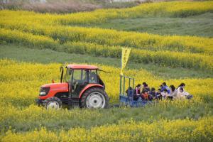 『『『菜の花フェスティバル002』の画像』の画像』の画像