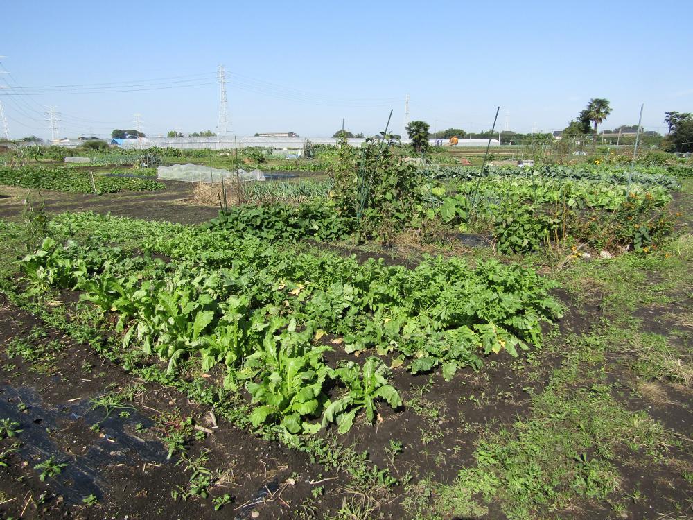 『『ふれあいの里家庭菜園(市民農園)』の画像』の画像